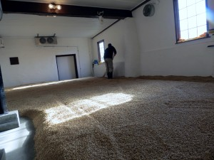 Mark Brault of Deer Creek Malthouse shoves grain as part of a process known as floor malting